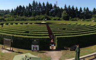 Corn and Hedge Maze