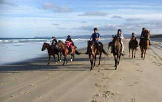 Waipu Horse Adventures2