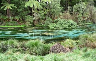 Hamurana lakeside reserve