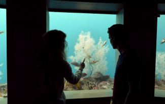 People enjoying the view in the underwater observatory